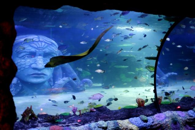 Detroit Aquarium Ocean tank 1