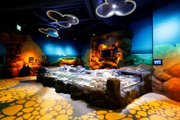 Detroit Aquarium Touchpool2